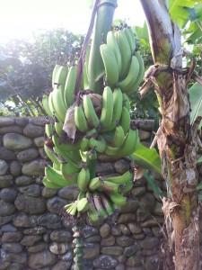 Taveuni Adventures